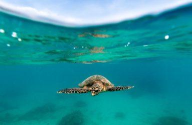 underwater-Shots-Dive-Centre-Tioman-19