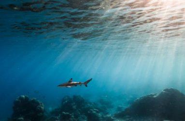 underwater-Shots-Dive-Centre-Tioman-28
