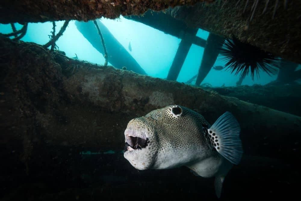 Padi Advanced Open Water Tioman Dive Centre Malaysia